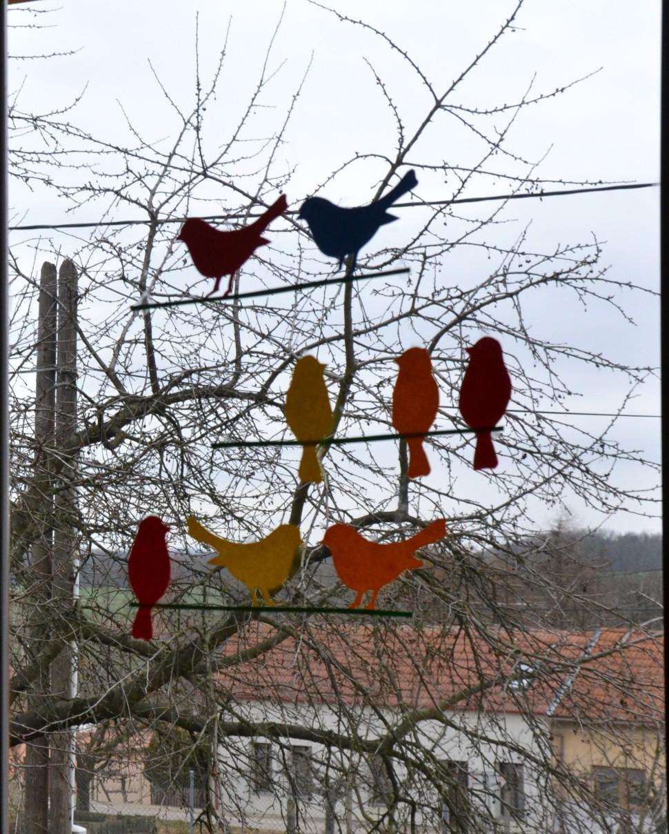 012 Ptačci naokno_o